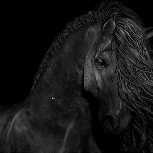 Black And White Photography Images Horse Wallpaper Background Photos