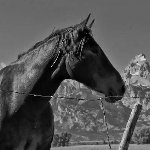 Black and White Photography images Black and White horse ...
