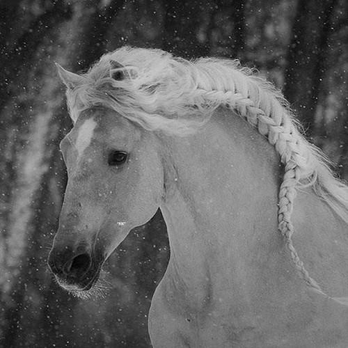 Black and white photography wallpaper called black and white horse