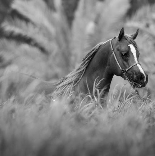 images of horses in black and white - photo #18