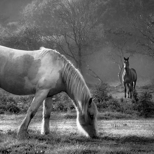 Black And White Horse Wallpaper Pictures to Pin on ...