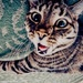 Cat icon made by me - KanonKyu  - animals icon