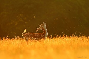 Deer photographie