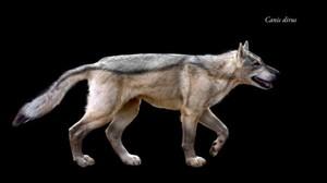 Dire भेड़िया