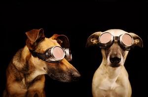 Dog फोटोग्राफी
