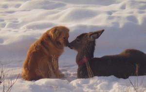 Dog and Deer