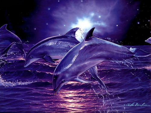 Dolphins Wallpaper Titled In The Night