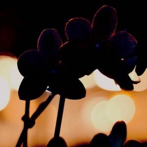 flores 16