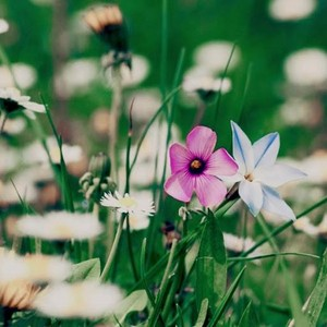flores 28