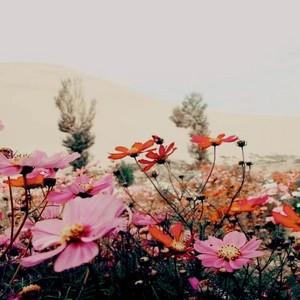 flores 30