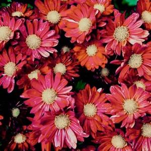 fleurs 39