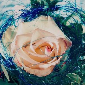 bunga 9
