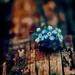 Icon made by me - KanonKyu - random icon