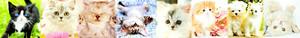 Kittens - smile19 fanpop Spot Look