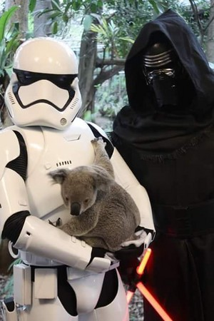 Kylo Ren and a Stormtrooper with a koala bear
