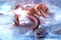 Mermaid - fantasy photo