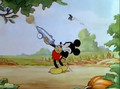 Mickey's Garden - mickey-mouse photo