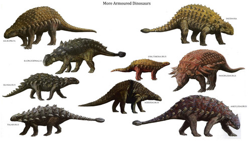 Dinosaurs wallpaper containing a triceratops entitled More Armoured Dinosaurs