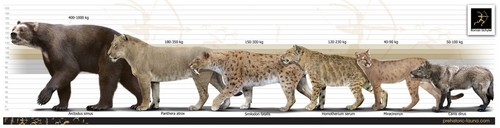 जानवर वॉलपेपर entitled Prehistoric North American Carnivores
