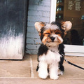 Puppy - dogs photo