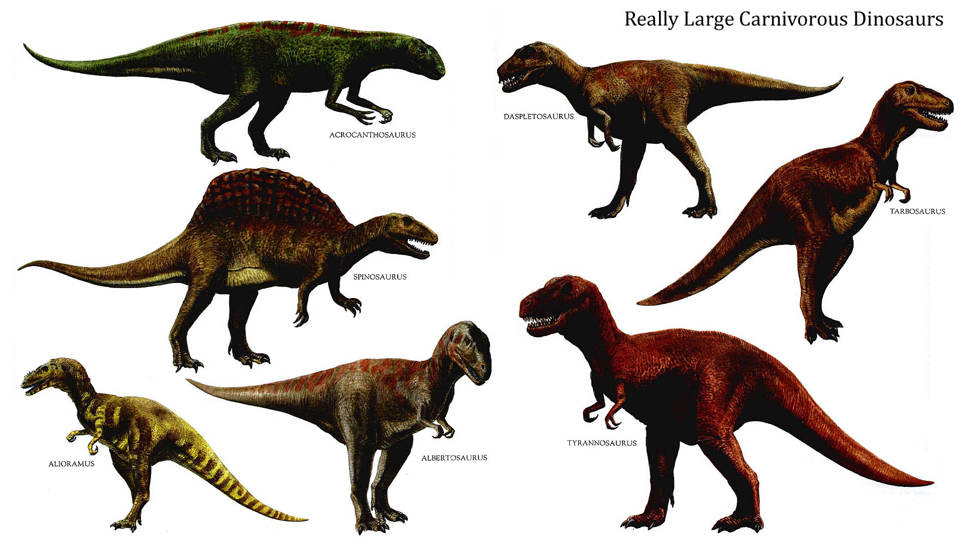 Really Large Carnivorous Dinosaurs