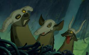 TLK hyenas