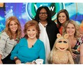 The View in 2016 - the-muppets photo