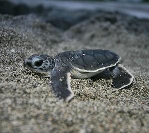 baby rùa, con rùa