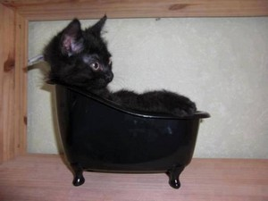 13239941 1424074957621385 2147231103035849654 n BLACK CAT IN TUB..jpg