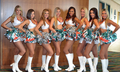 2013 miami dolphins cheerleaders