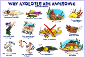 Axolotls are Awesome