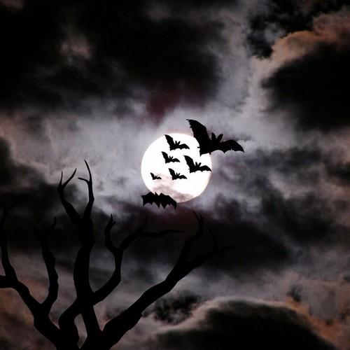 Kinzoku Bat Hd Wallpaper: Bats! Images Bats HD Wallpaper And Background Photos