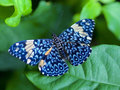 Blue Butterfly - butterflies photo