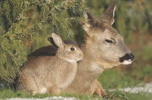 Bunny and Deer