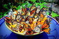 Butterfly Feeder Bowl - butterflies photo