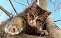 Cat - cats wallpaper