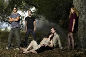 Dawn Forest Kristen Stewart Robert Pattinson Taylor Lautner The font b Twilight b font Saga font