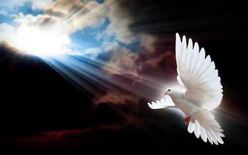 Doves پیپر وال called کبوتر