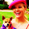 Legally Blonde photo possibly with a chihuahua entitled Elle Woods