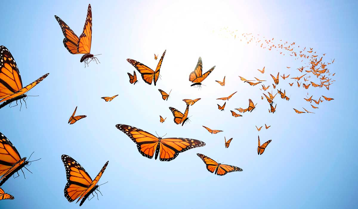 Flying 蝶