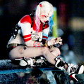 Harley - harley-quinn photo
