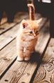 Kitten - cats photo