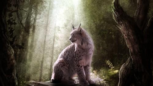 Lynx cat karatasi la kupamba ukuta titled Lynx in Forest