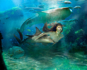 Mermaid with Shark