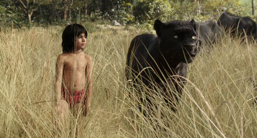 The Jungle Book kertas dinding called Mowgli and Bagheera