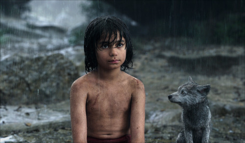 The Jungle Book wolpeyper titled Mowgli and Grey