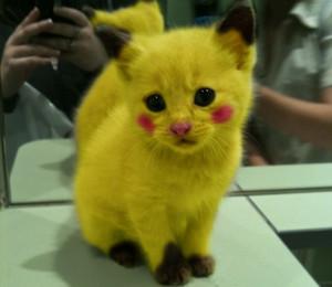 Pickchu kitty