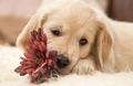 Puppy - dogs wallpaper