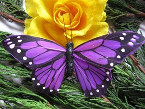 Purple papillon