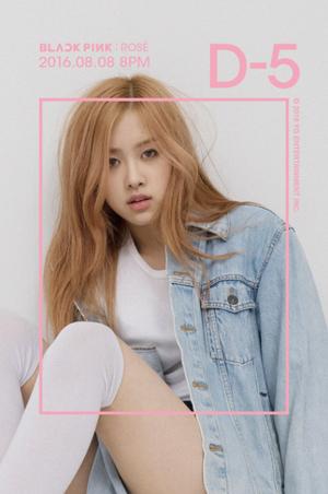Rose individual teaser image